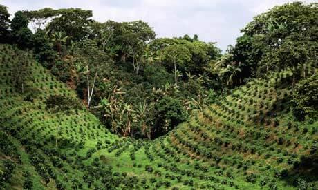 Plantation café cuba