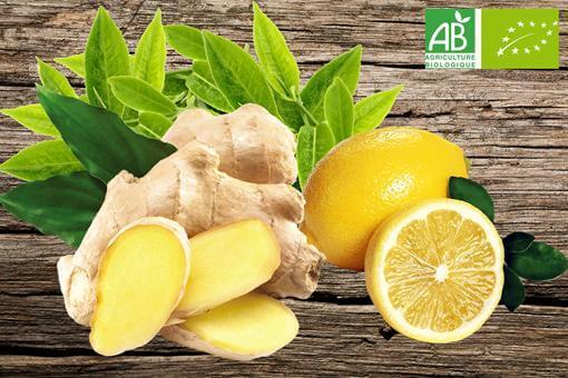 Illustration : feuilles de thé vert avec gingembre et citron BIO
