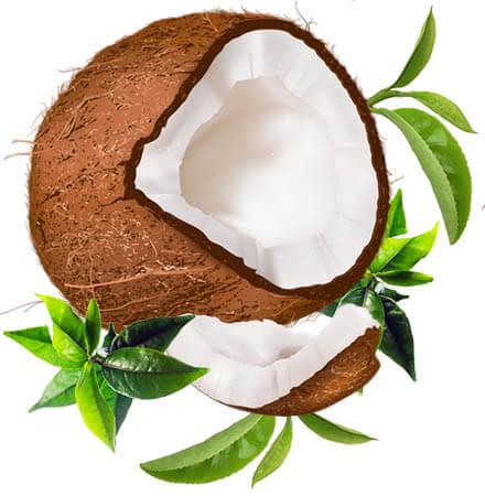 thé coco illustration noix coco et feuilles thé